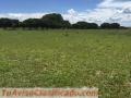 fazenda-com-3-500-hectares-tendo-1100-metros-de-altitude-excelente-no-brasil-3.jpg